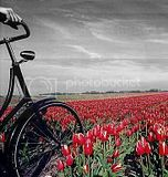 My Colorsplash Bike Scene