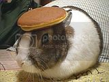Pancake Rabbit just silly